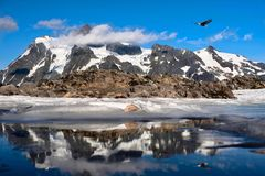 Bold Eagle flying over snowcapped mountains and reflection in little alpine lake. stock image