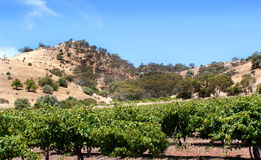 Summer hills in the Barossa Valley Stock Photo