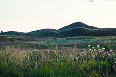 Summer hills. With grass and flowers Royalty Free Stock Photography