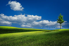 Summer hills under blue skies Royalty Free Stock Image