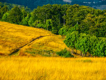 Summer hilly landscape Stock Images