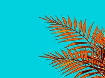 Summer holiday of an abstract background with palm leaves stock illustration