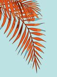 Summer holiday of an abstract background with palm leaves royalty free illustration
