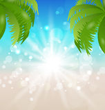 Summer holiday background with sunlight and palmtr Royalty Free Stock Photos