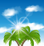 Summer holiday background with sunlight and palmtr Stock Photo