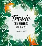 Summer Holiday Background With Tropical Plants Royalty Free Stock Images