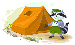 Summer holiday camp. Scout raccoon standing near tent. Raccoon tourist tent set. Camping Royalty Free Stock Photos