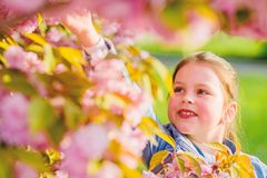Summer holiday. Childhood beauty. happy girl in cherry flower. Sakura tree blooming. blossom smell, allergy. skincare royalty free stock photo