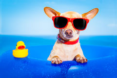 Summer holiday dog Royalty Free Stock Images