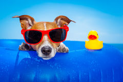 Summer holiday dog Royalty Free Stock Photos