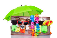 Summer holiday dog Royalty Free Stock Image