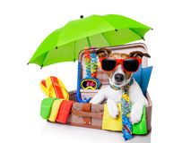 Summer holiday dog. Summer vacation dog in bag full of holiday items Stock Photo