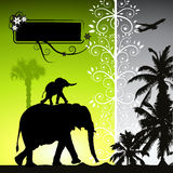 Summer holiday, elephants Stock Photography
