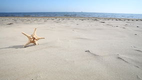 Summer holiday. Starfish seastar star on the sandy beach. Royalty Free Stock Photo