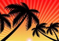 Summer holiday sunset sunlight vector background Stock Photo