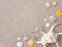 Summer holiday and vacation concept. Seashells on sand. Sea summ Royalty Free Stock Images
