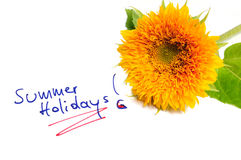 Summer Holidays. Beautiful sunflower with green leaves beside the lettering Summer Holidays Stock Photography