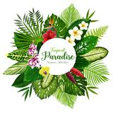 Summer holidays banner of tropical palm and flower. Summer holidays banner of tropical palm leaf and hawaiian flower. Exotic floral bouquet of hibiscus, plumeria Royalty Free Stock Photography