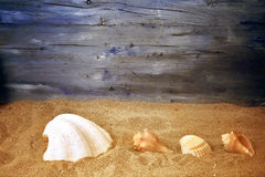Summer holidays card. Summer holidays background seashells and wooden space for advertising stock images