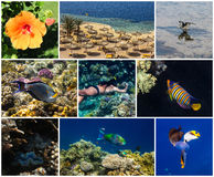 Summer Holidays. Collage of pictures in Sharm el Sheikh, Red Sea, Egypt royalty free stock photo