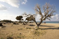 Summer holidays on Elafonisi beach, southwestern corner of Greek island Crete. Protected nature reserve Natura 2000, early morning, nobody, trees on the beach Royalty Free Stock Images