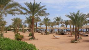 Summer holidays. People on the beach in Sharm El Sheikh, Egypt stock video