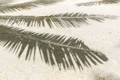 Palm tree shadow on sand of tropical beach. Summer holidays and vacation concept - palm tree shadow on sand of tropical beach stock photos