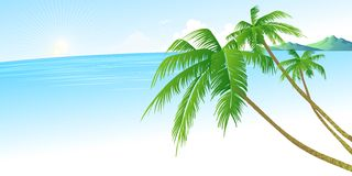 Summer holidays vector background  with palm Royalty Free Stock Photography