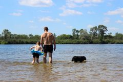 Family vacation on the shore of a clean and beautiful river. Summer holidays and weekends. Everyone is tired of work. Dad with a small son and a dog are bathing Stock Photography
