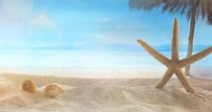 Summer holidays wih star fish on sand stock image