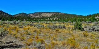 Summer in the Hollow. View in Skull Hollow in summer - Crooked River National Grassland - OR stock image