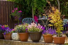 Summer home garden with lovely flowers. Beautiful, Summer garden with amazing blossom in big flowerpots Royalty Free Stock Photography