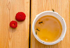 Summer honey and hornets Stock Photography
