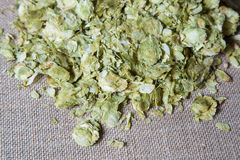 Summer Hops. On a muslin surface Royalty Free Stock Photos