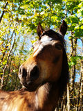 Summer horse Stock Photography
