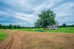Summer, house, Farm, asia,thailand,tree Royalty Free Stock Photography