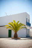 Summer house and palm tree in Portugal Stock Photos