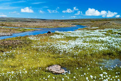 Summer Iceland. Small river among fields of green grass. Royalty Free Stock Photos