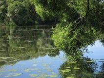 Summer idyl. Summer riverbank stock photography