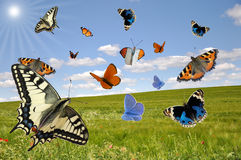 Summer idyll. Flying colorful butterflies in front of a idyllic landscape in summertime Royalty Free Stock Photo