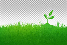 Summer illustration with green grass and growing sprout Stock Photo