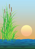 Summer illustration with lake and reed Stock Photos