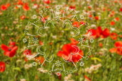 Summer illustration with poppies  meadow Stock Photos