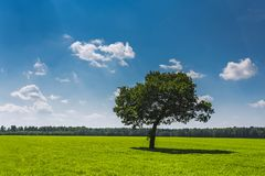 Field,tree and blue sky stock image