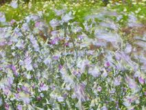 Summer image with flowers blowing in the wind. Royalty Free Stock Photography