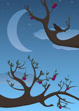 Summer. The image represents summer night with branches on the dark sky Stock Images