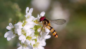 Summer Insect Stock Photography