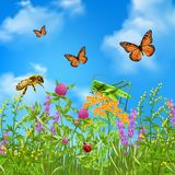 Summer Insects Realistic. Insects in summer grass field realistic colorful composition with butterflies bumblebee grasshopper and ladybird vector illustration Royalty Free Stock Images