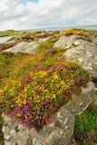 Summer ireland landscape Stock Photography