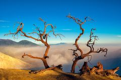 Volkano Ijen trees royalty free stock image